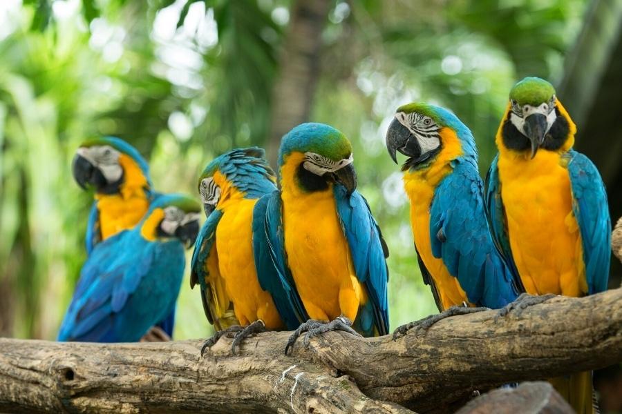 Najciekawsze atrakcje turystyczne Dominikana