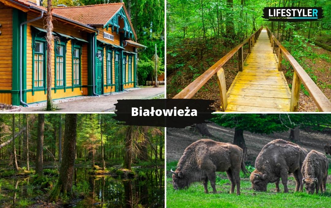najpiękniejsze miejsca w Polsce Białowieża