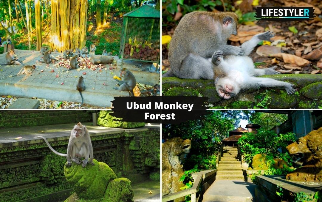Ubud Monkey Forest Bali Atrakcje Turystyczne