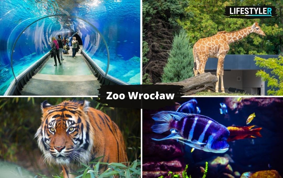 atrakcje dla dzieci w Polsce zoo Wrocław