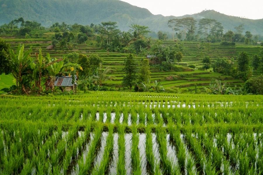Najpiękniejsze miejsca na Bali